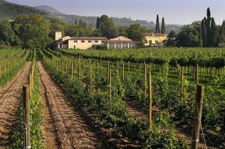 Villa Serego Alighieri - Cantine Masi foto 9