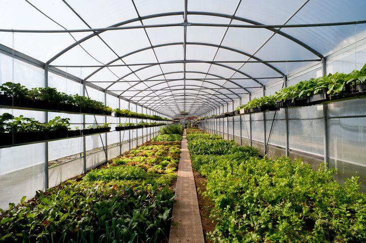Agriturismo La Camilla foto 12