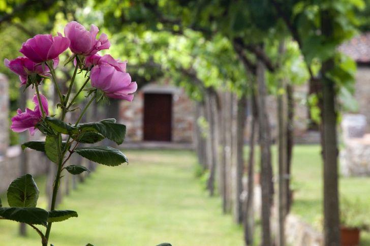 Villa Montelucci foto 8