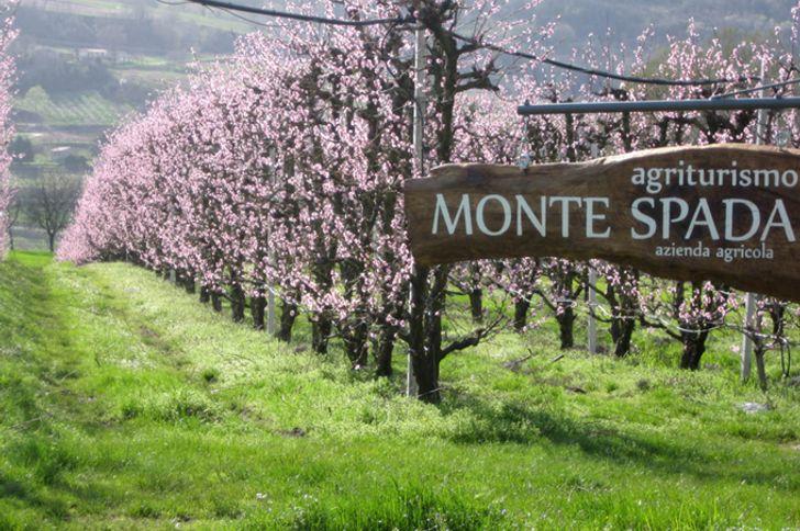 Monte Spada Agri Culture foto 2