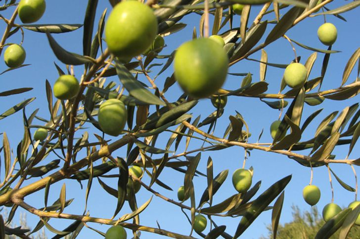 Monte Spada Agri Culture foto 10