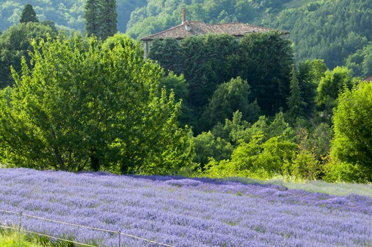 Monte Spada Agri Culture foto 11