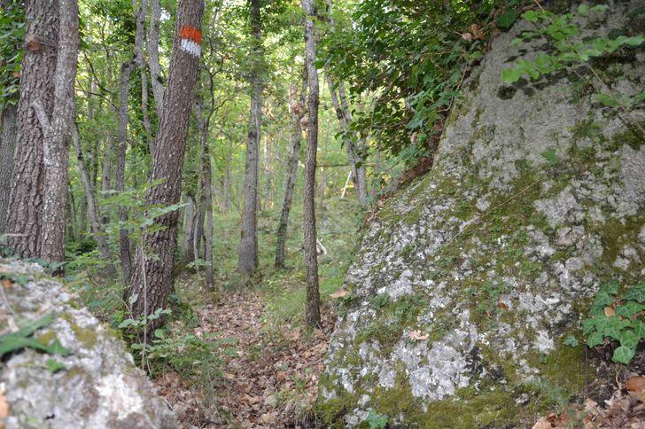 Monte Spada Agri Culture foto 12