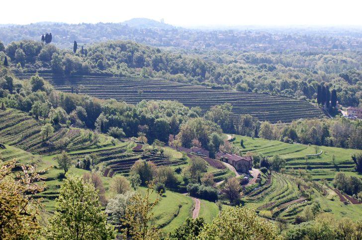 Azienda Agricola La Costa - Cascina Galbusera Nera foto 9